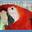 DCL Pretty Bird Parrot